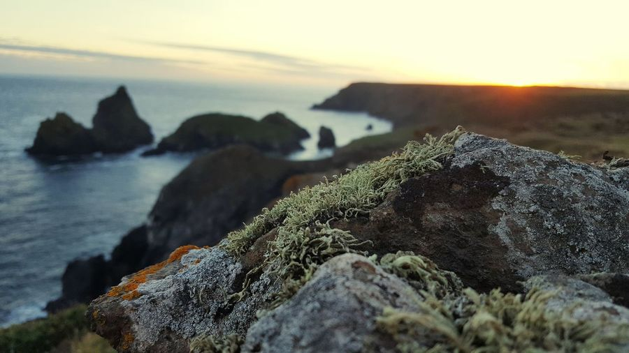 Moss growing on rocks by sea against sky during sunset