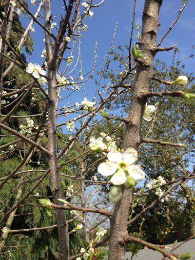 Love springtime 😊