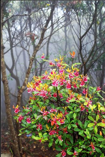Flower Beauty In Nature Nature Growth Fragility Freshness Close-up Plant No People Outdoors Pink Color Flower Head Blossom Springtime Day Leaf Multi Colored Branch Discover Your City Leisure Activity Beauty In Nature Shenzhen.China Wutong Mountain