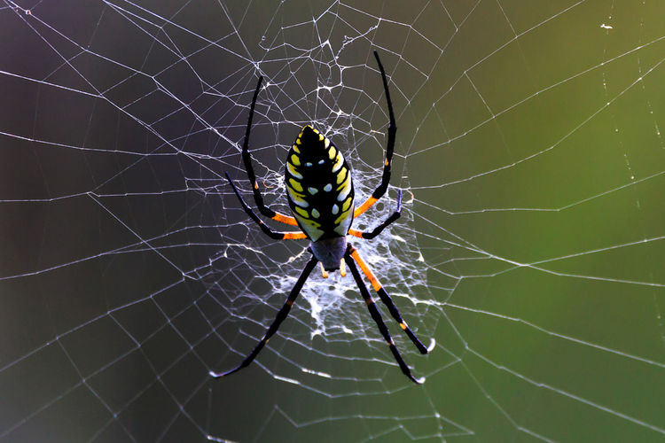 Animal Animal Leg Animal Themes Animal Wildlife Animals In The Wild Arachnid Arthropod Beauty In Nature Close-up Complexity Day Focus On Foreground Fragility Insect Invertebrate Nature No People One Animal Outdoors Spider Spider Web Spinning Vulnerability  Web