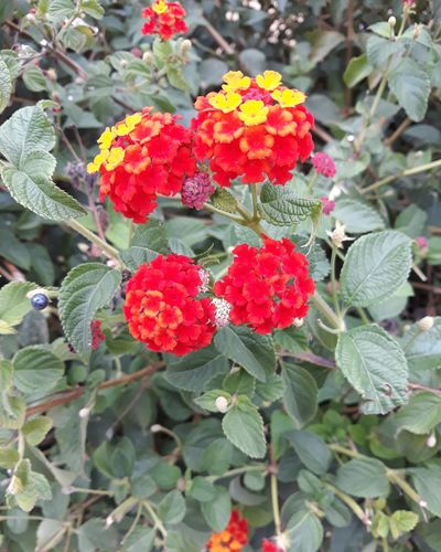 Beauty In Nature Flower Freshness Green Color Growth Plant