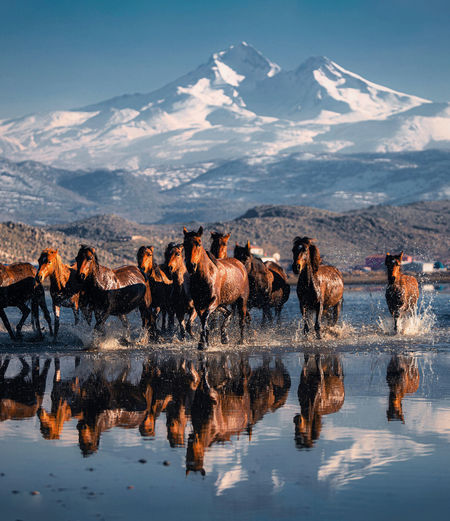 When the wild horses run