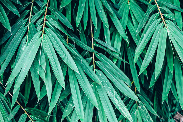 Backgrounds Bamboo Beauty In Nature Close-up Cover Day Foliage Full Frame Green Color Grove Growth Leaf Nature Outdoors Pattern Plant Texture Tree My Best Photo Springtime Decadence
