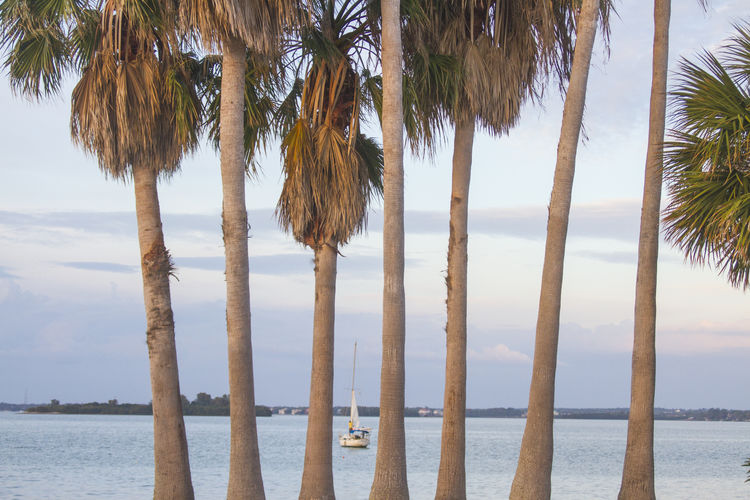 Beach Beauty In Nature Causeway Day Dunedin, Florida Florida Florida Clouds Florida Sunset Horizon Over Water Nature Ocean Outdoors Palm Tree Sailboat Sailboat In Sunset Sand Scenics Sea Sky Sunset Tranquil Scene Tranquility Tree Tree Trunk Water The Week On EyeEm
