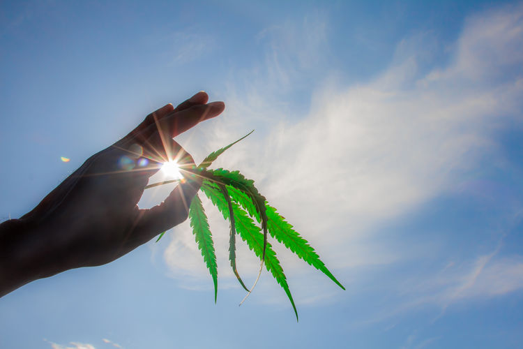 Low angle view of person holding plant against sky