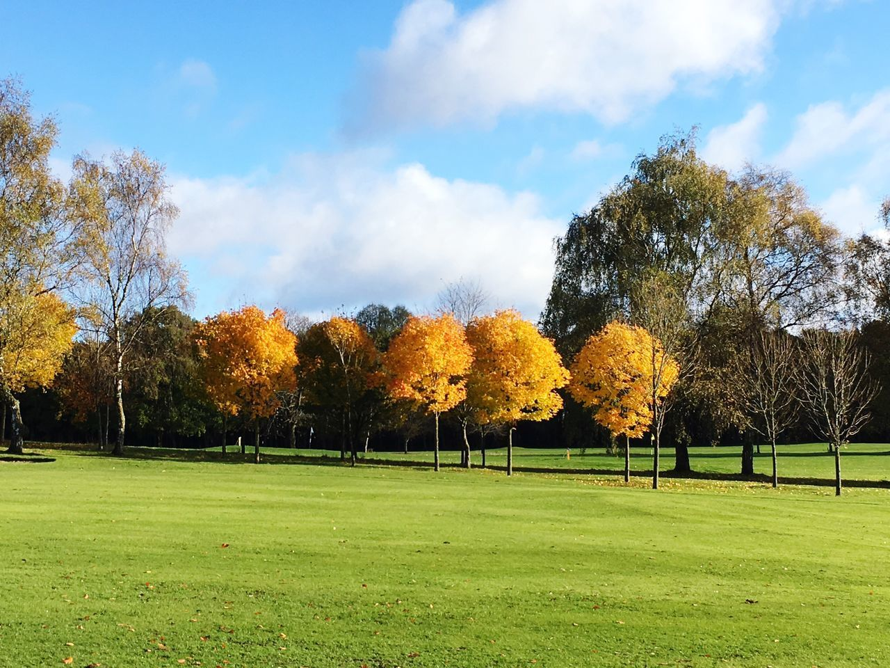 tree, grass, nature, beauty in nature, tranquility, sky, tranquil scene, scenics, autumn, field, green color, growth, cloud - sky, landscape, change, day, no people, leaf, outdoors, park - man made space, playing field, yellow, sport, soccer field