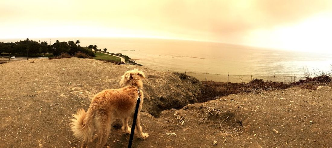Hiking with your best friend EyeEm Selects Sea Sky Water Horizon Over Water Beach Animal Nature Land Animal Themes Mammal One Animal Scenics - Nature Sunset Horizon Outdoors Vertebrate Beauty In Nature Domestic Animals No People Pets
