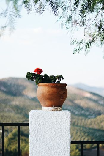 Close-up of potted plant against railing