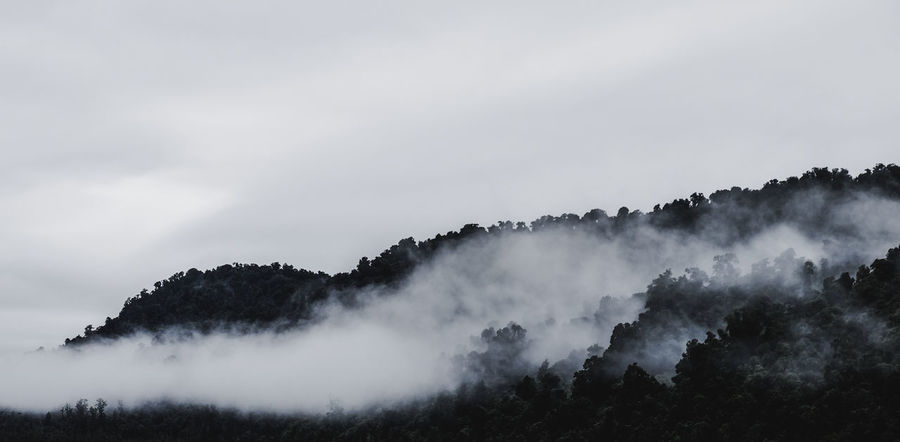 Beauty In Nature Clouds Enchanted  Enchanted Forest Fog Foggy Foggy Day Foggy Landscape Foggy Mountains Foggy Weather FUJIFILM X-T1 Mountain Mystic Mystical New Zealand New Zealand Beauty New Zealand Impressions New Zealand Landscape New Zealand Photography New Zealand Scenery Outdoors Scenics Tranquil Scene Traveling