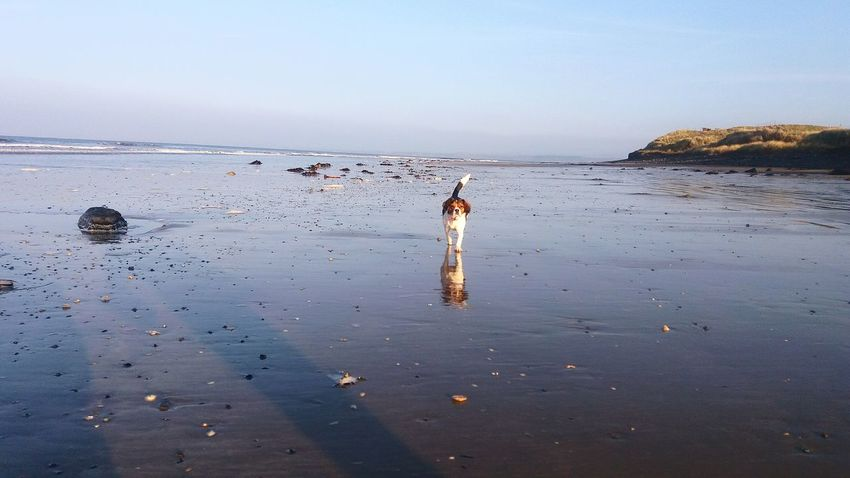 JeanaBear 😊 Walking The Dog Dog Love Dogslife Happy Dog Doing His Thing Beach Stones & Water Shells Sand Sea Sky Out Walking Beachlife Xbreed Favourite Places Favourite Things Rossnowlagh Ireland🍀 Ireland Feel The Journey The Troublemakers