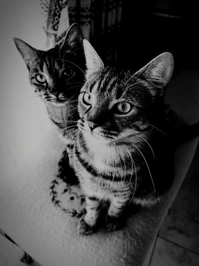 my two loves Feline Looking At Camera Alertness Close-up Cat At Home Home Adult Animal Animal Face