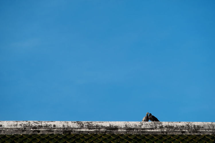 couple bird Architecture Built Structure Sky Building Exterior Copy Space Blue Nature Day No People Low Angle View Building Wall Clear Sky History The Past Outdoors One Animal Fort Animal Birds Couple Realtionship