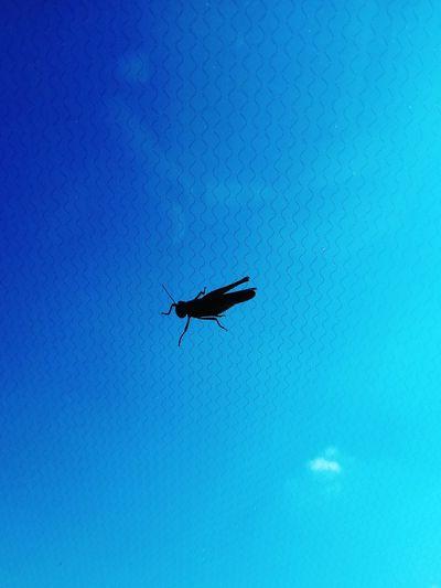 Grasshopper Ombresky Fromthecar Bird Water Flying Blue Silhouette Clear Sky Sky
