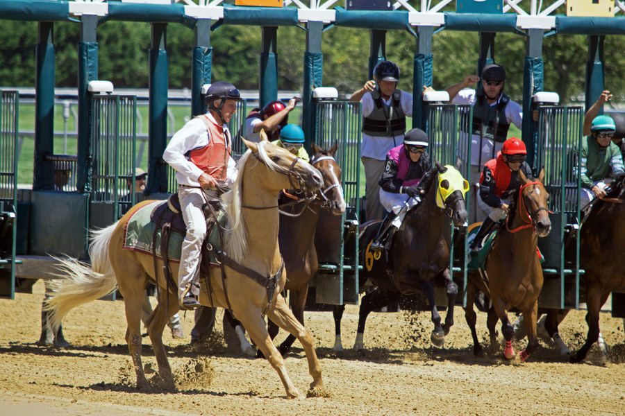 Daytime Delaware Horses Day Daylight Fast Horse Horse Photography  Horse Racing Horse Riding Horseback Riding Jockey Outdoors Race Speed