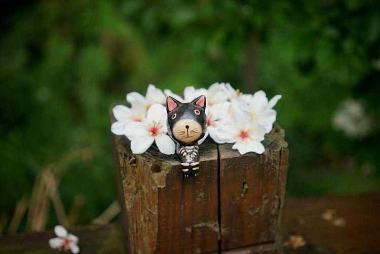 雨天的等待,因為有花 桐伴 ,就不孤單了。
