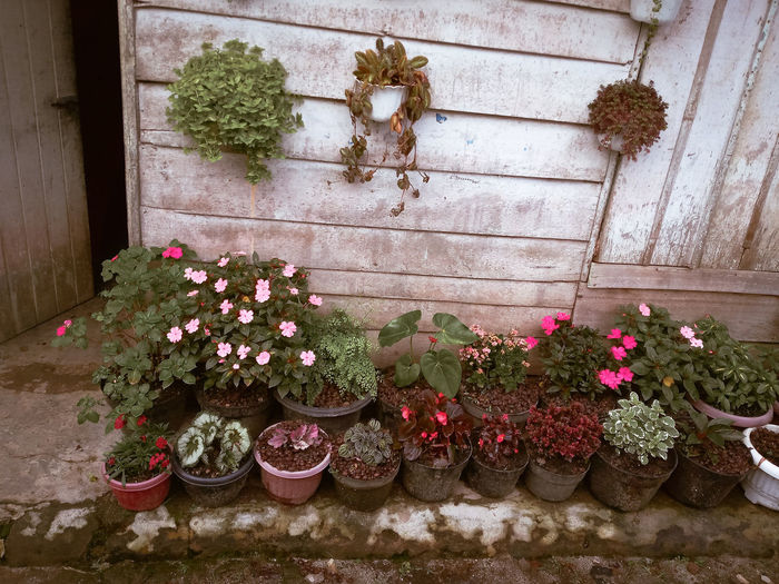 Flowers on potted plant against wall