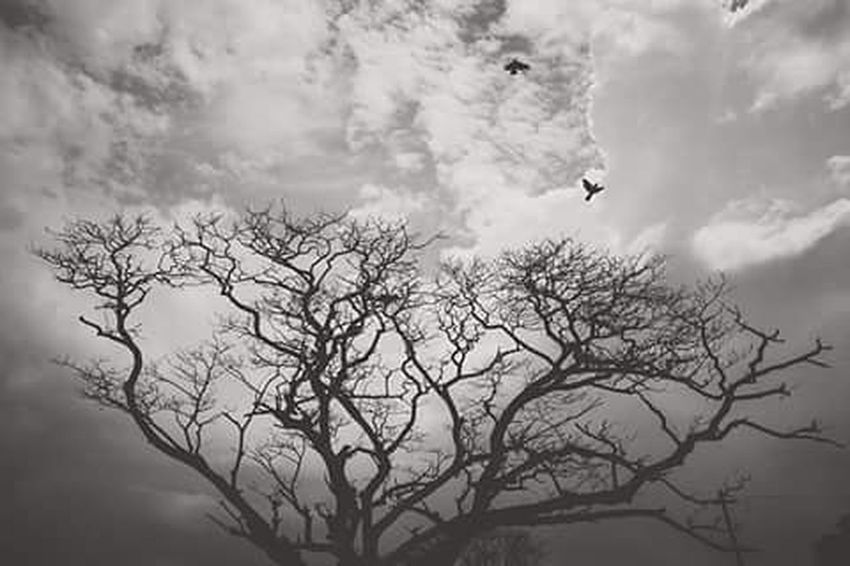 Nature Photoftheday Photographyislife Photographers Photography Bnwphotography Bnw Blackandwhite Tree Birds Sky Cloudy Gloomyday  Instagram Instapic Dhakatales Dhakagram Igers Instagraphers Fujifilm_xseries Everydayeverywhere