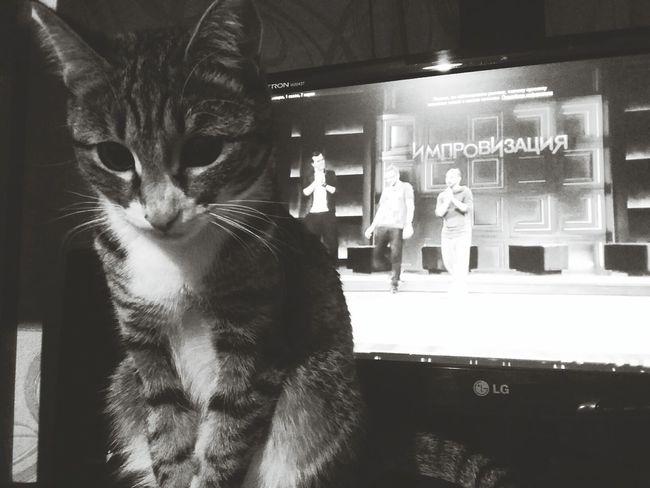 Cats Cat Cat Lovers импровизация