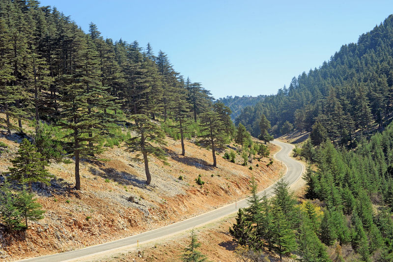 mountain road in cedar forest Tree Plant Beauty In Nature Road Mountain Scenics - Nature Tranquil Scene Tranquility Environment Nature Sky Non-urban Scene Landscape Transportation No People Land Growth Day Clear Sky Remote Pine Tree