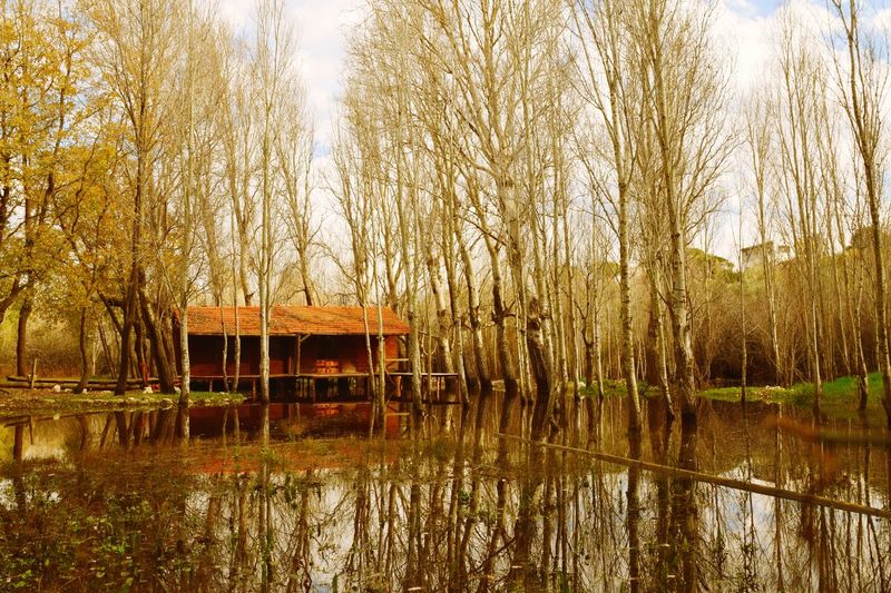Nature Water Lake Tree Built Structure Outdoors Tranquility No People Day Beauty In Nature Tranquil Scene Architecture Sky Boathouse Swamp Fall Autumn Autumn Colors Wooden Cabin Tree Trees EyeEmNewHere