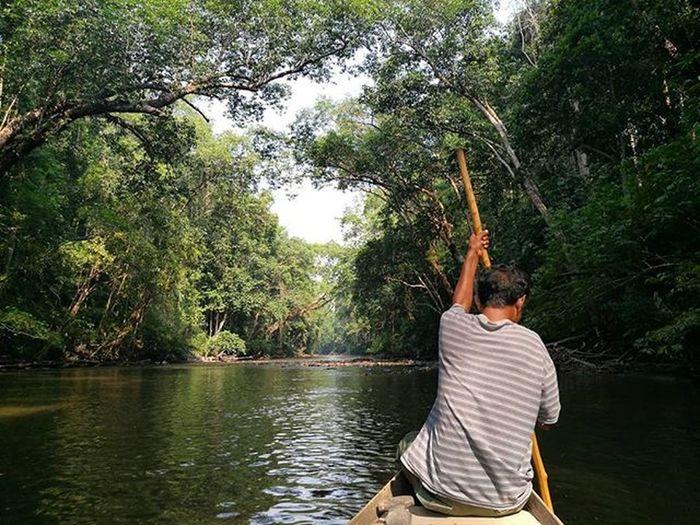 The beauty of Tamannegara MalaysiaTourism Visitmalaysia River Rainforest