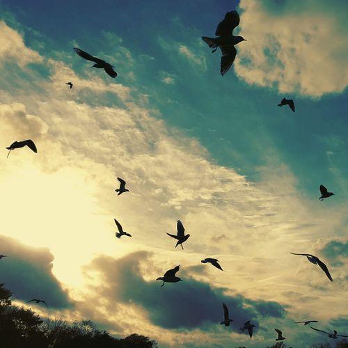 Seagulls Sky Clouds