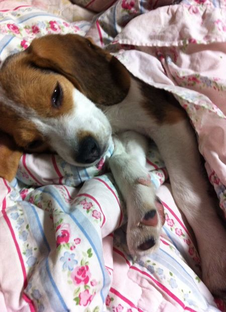My Dog Beagle My Dogs Are Cooler Than Your Kids Pet Dog Pets At Shanghai China I Love My Dog Popular