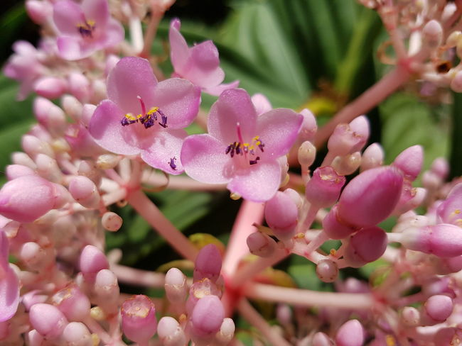 Close up of wild flower. Growth Wild Tropical Fresh Flower Head Flower Pink Color Petal Close-up Plant In Bloom Blossom Plant Life Pollination