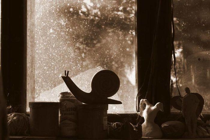 Art Creativity Shadows & Lights Snail Window