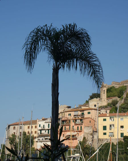 A towering palm tree is silhouetted against a clear blue sky and hillside of the town of Porto Ecole rising up from the Mediterranean Sea shore. Blue Blue Sky Building Building Exterior Buildings And Sky City Clear Sky Day Hillside Italy Masts Mediteranean No People Outdoors Palm Tree Palm Tree Silhouette Portrait Sailing Shore Sky Sunlight Sunny Town Travel Destinations Tree