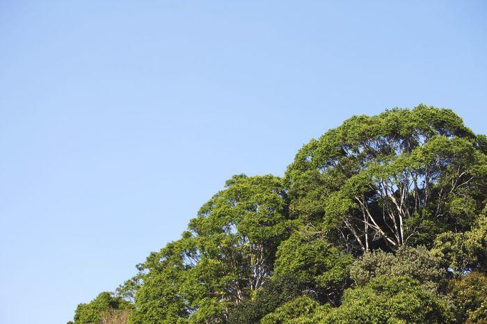 Tropical Rainforest Canopy Negative Space