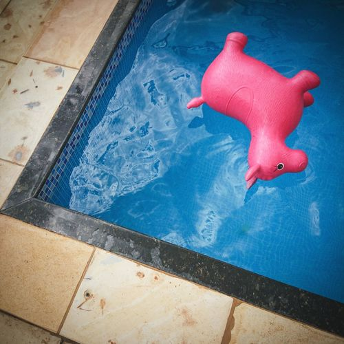 Blue And Pink Toy Forgotten Toys Geometric Lines Water High Angle View Swimming Pool Poolside Pool Party Wet