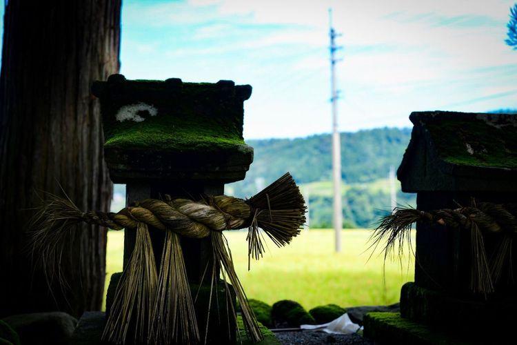 お邪魔いたしました。 Shinto Shrine Shrine Plant Sky Cloud - Sky Nature Day No People Architecture Built Structure Outdoors Sunlight Field Wood - Material Environment Growth Green Color Building Exterior Tree