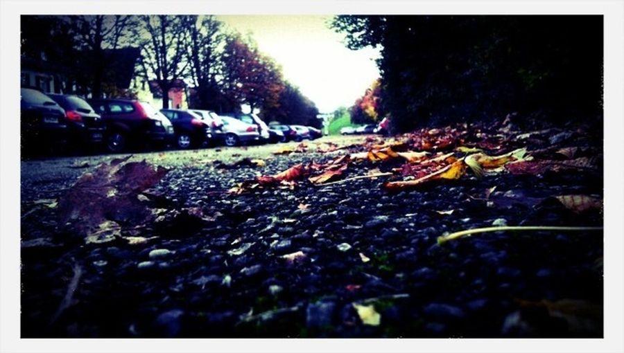 The EyeEm Facebook Cover Challenge Train Parkingplace Autumn