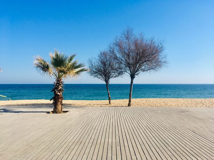 Trees on beach against clear blue sky
