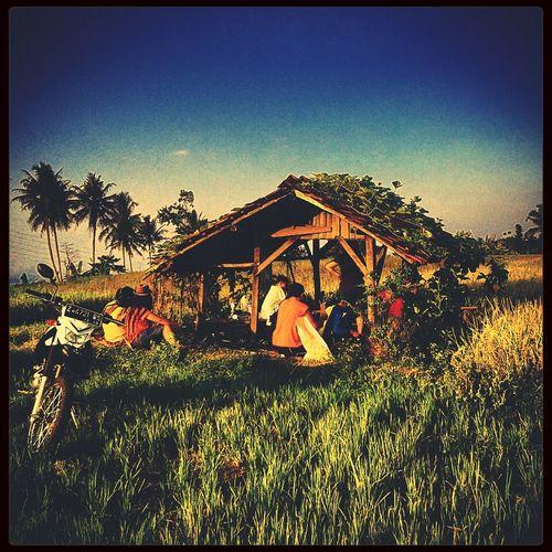 Rice field Paradise