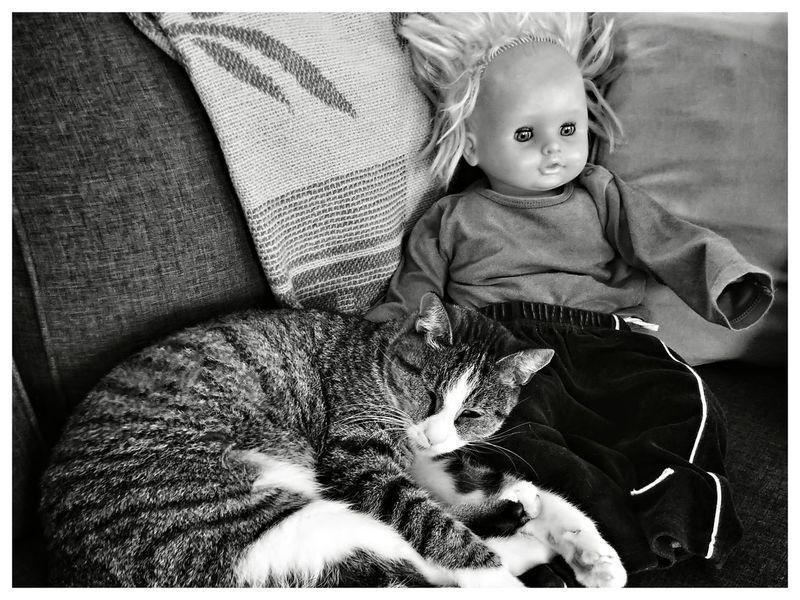 """Cat loves Chucky"" Doll Blackandwhite Blackandwhite Photography Blackandwhitephotography Blackandwhitephoto Black And White Black And White Photography EyeEm Best Shots - Black + White Cute Close-up Cat Whisker"