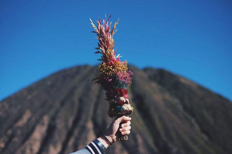 Cropped hand holding flowers against mountain in sunny day