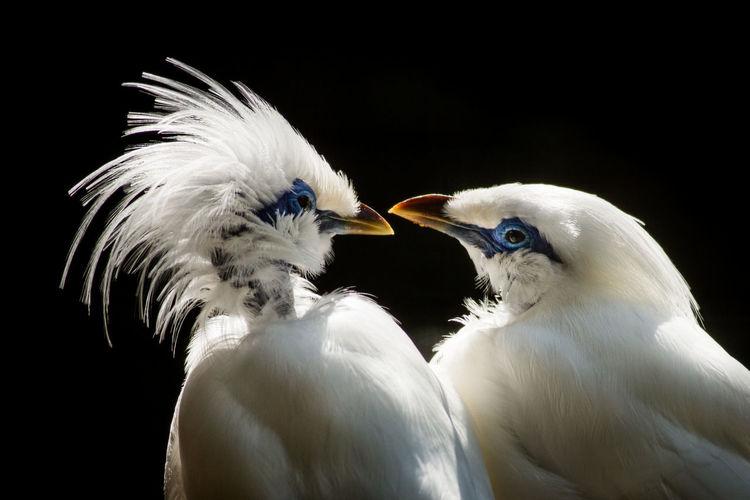 Close-Up Of Birds Against Black Background