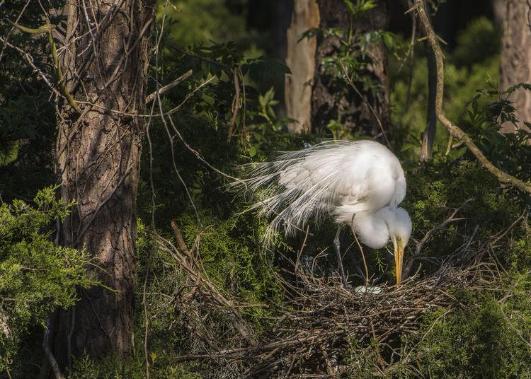 Animal Themes Animal Wildlife Animals In The Wild Bird Day Eggshell Egret On Nest Nature Nest No People One Animal Outdoors Tree