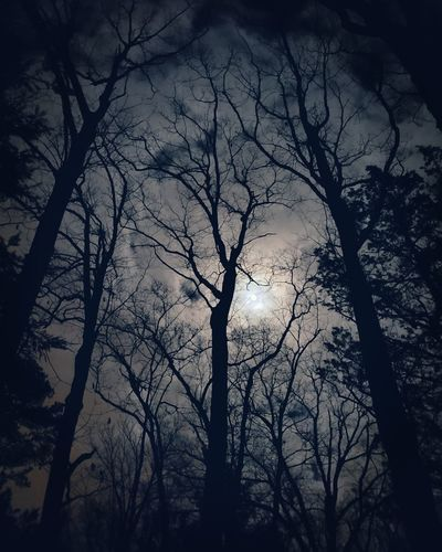 Sky Moon Night Silhouette Outdoors Moonlight Tree Branch Bare Tree Silhouette Tree Trunk Winter Tree Area Bird Sky Dead Tree Treetop Full Moon Pine Woodland
