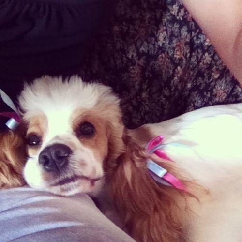 #mydog #life #cute