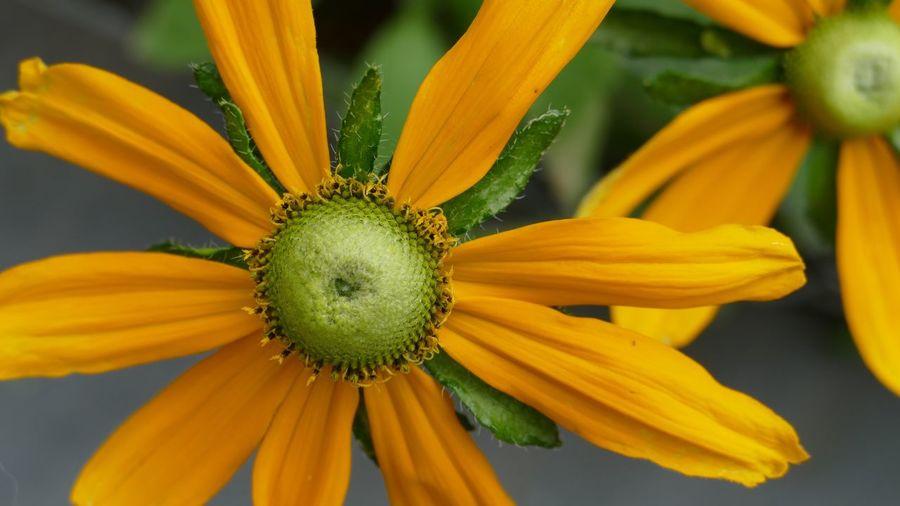 Yellow Yellow Flower EyeEm Flower EyeEm Nature Lover Coloursplash Flowerporn Flower The Art Of Photography
