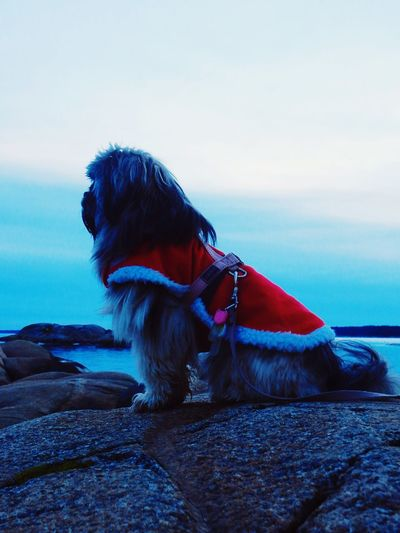 Christmas Around The World Relaxing Christmastime Christmasday By The Sea Dog Skjeberg, Norway Dusa It's Cold Outside Pets Pet Dogs Dog Love Dogslife DogLove Doglover Dogstagram Christmastime Christmas Spirit Christmas Is Coming Dog Clothes Santa Claus Christmas Looking Away Close-up Sea