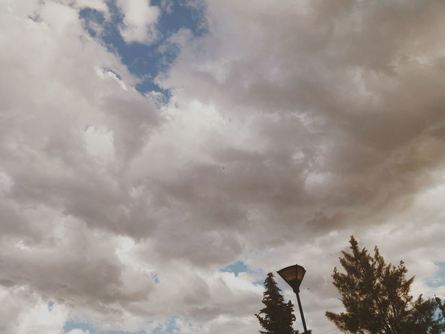 Park Low Contrast Cielo Clouds EyeEmNewHere Park Parque  Tarde  Afternoon Nubes Nubes Y Cielo VSCO Trelew Chubut Argentina Argentina Photography Tree Sky Cloud - Sky Landscape Dramatic Sky First Eyeem Photo