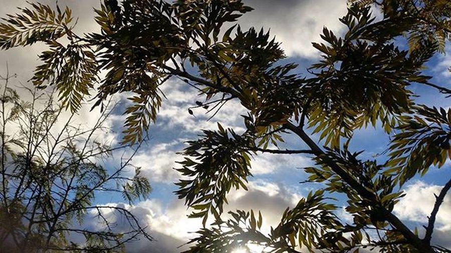 Amaneceres Santacruz Tenerife Islascanarias Nubes Rayosdesol LosOdiososLunes