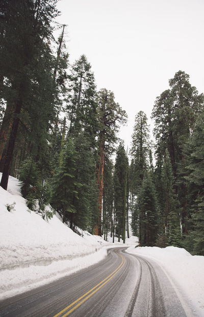 Beauty In Nature Cloudy Cold Temperature Day Forest Nature No People Outdoors Road Road Roadtrip Scenics Sequoia Sequoia National Park Snow Snowing Spring The Way Forward Tranquil Scene Tranquility Transportation Tree Trees Winding Road Winter