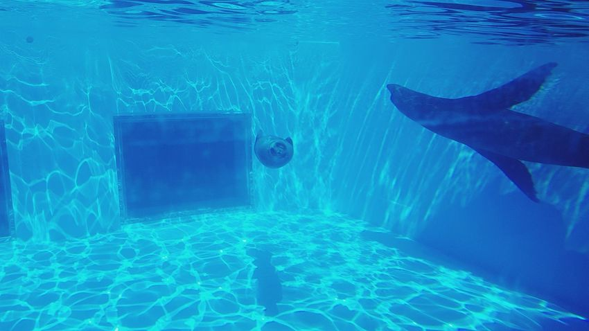 Seal No People Water Tourism Travel Destinations Pool Time Underwater