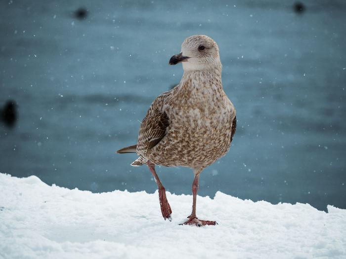 Bird perching on snow