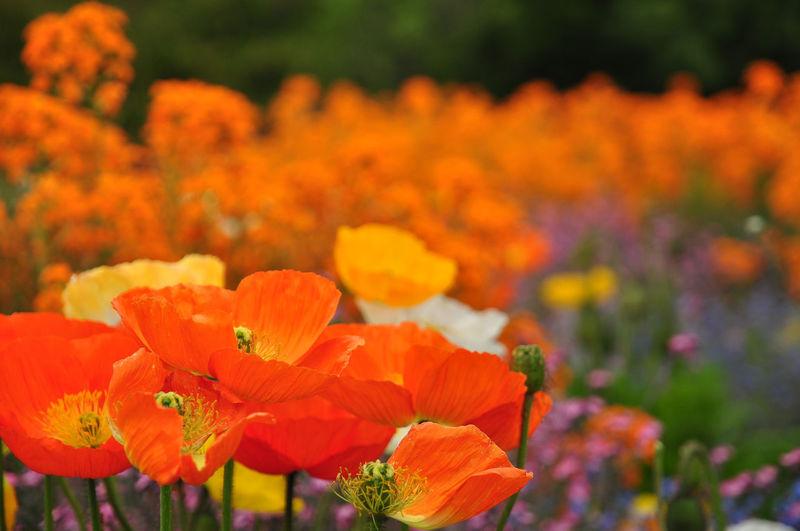 Jardin Des Plantes  Flower Fragility Beauty In Nature Freshness No People Nature Selective Focus Orange Color Flower Head Close-up Outdoors